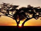 Топ 10 самых инновационных компаний Африки